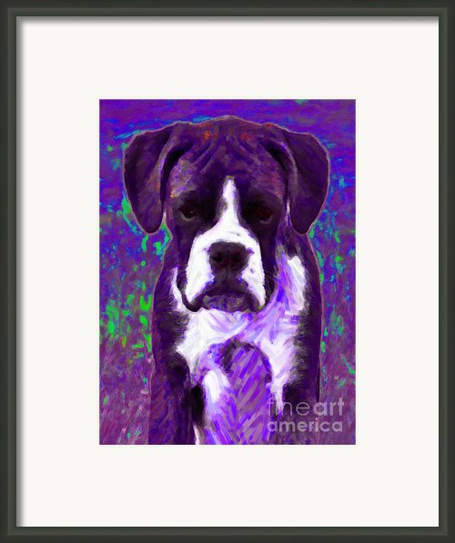 Boxer 20130126v6 Framed Print By Wingsdomain Art And Photography