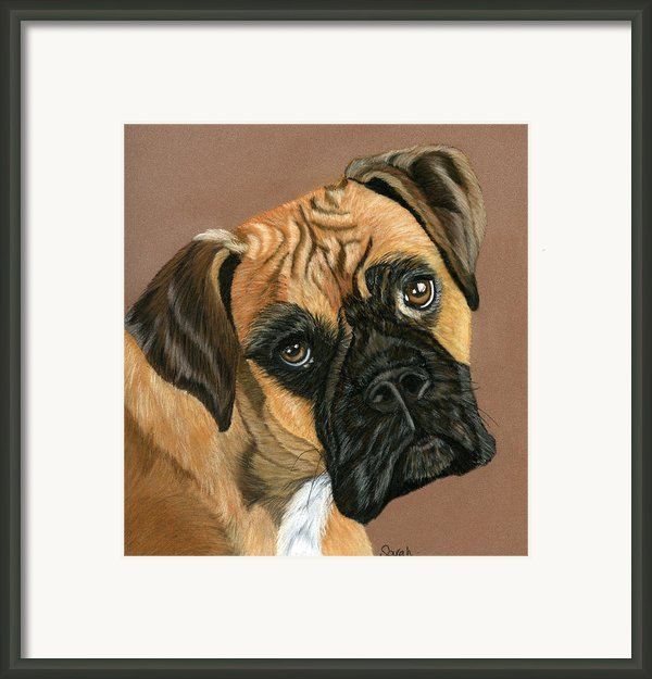 Boxer Dog Framed Print By Sarah Dowson