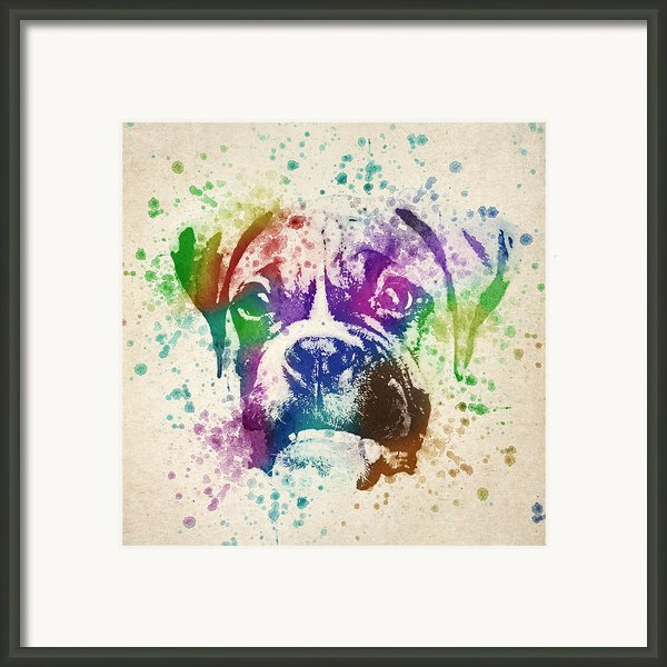 Boxer Splash Framed Print By Aged Pixel