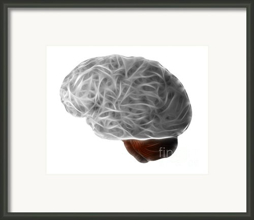 Brain Framed Print By Michal Boubin