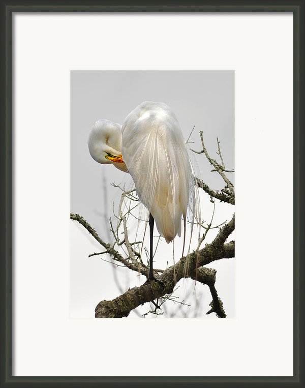 Bride Of Magnolia Framed Print By Donnie Smith