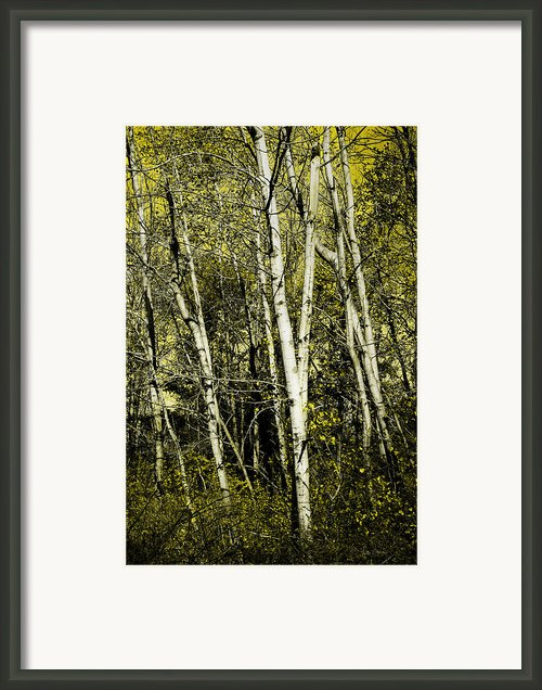 Briers And Brambles Framed Print By Luke Moore