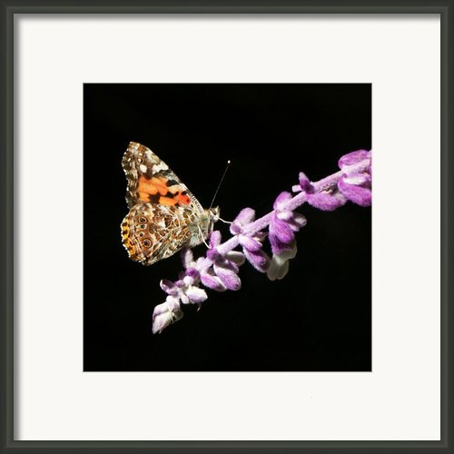 Bright Orange Moth On Purple Flower Framed Print By Marilyn Hunt