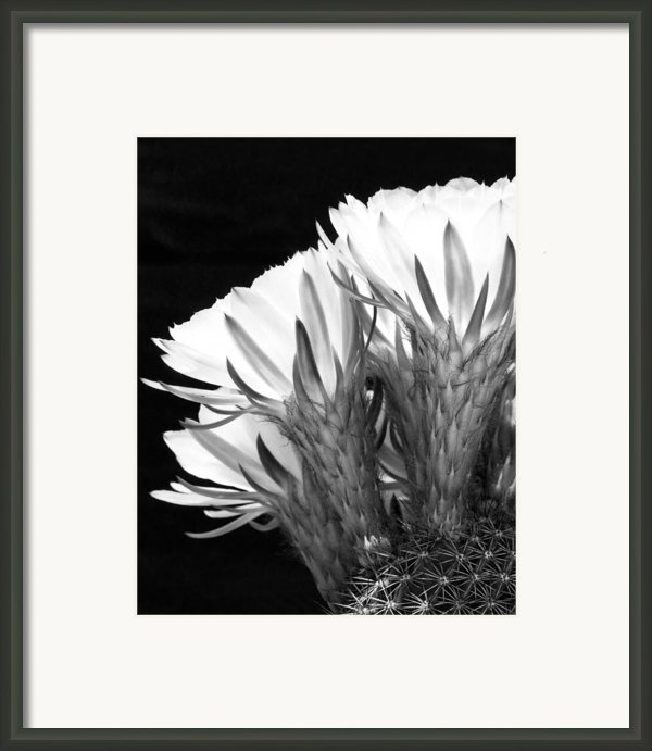 Brilliant Blossoms Diptych Left Framed Print By Kelley King