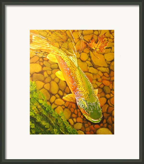 Brown Fish Framed Print By Terry Gill