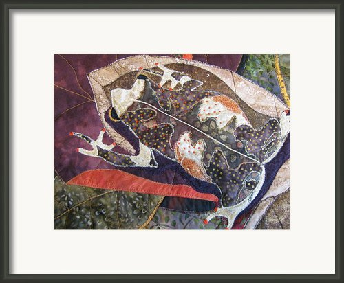 Brown Forest Toad Framed Print By Lynda K Boardman