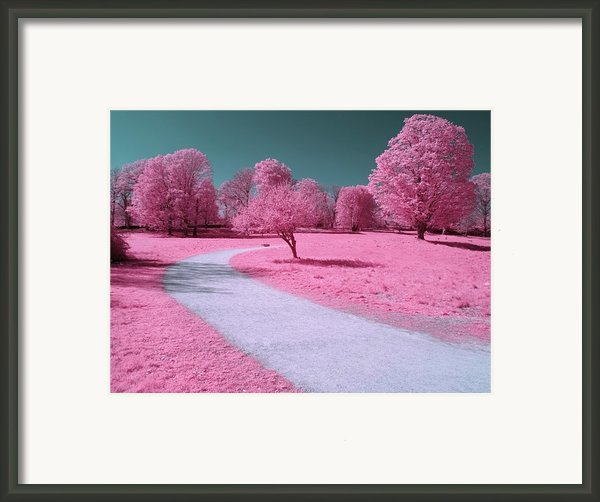Bubblegum Bliss Framed Print By Luke Moore
