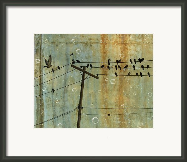 Bubbly Birds Framed Print By Gothicolors Images