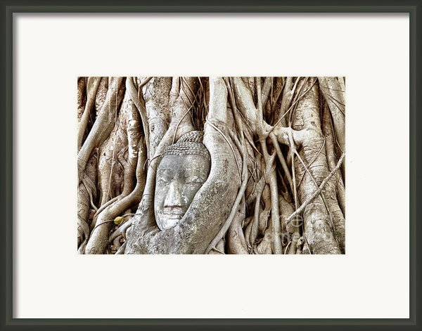 Buddha Head In Tree Wat Mahathat Ayutthaya  Thailand Framed Print By Fototrav Print