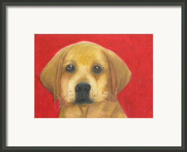 Buddy The Labrador Framed Print By Jeanne Fischer
