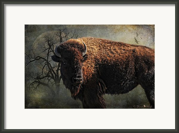 Buffalo Moon Framed Print By Karen Slagle