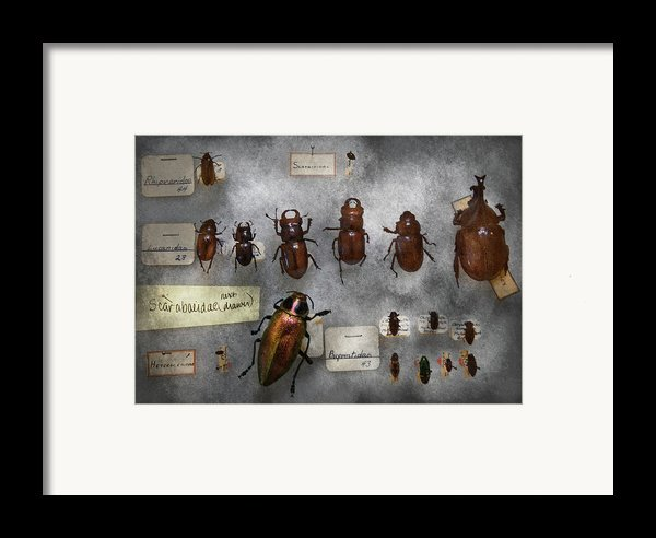 Bug Collector - The Insect Collection  Framed Print By Mike Savad