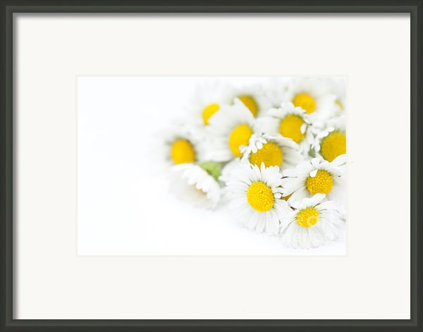 Bunch Of Daisies Framed Print By Anne Gilbert