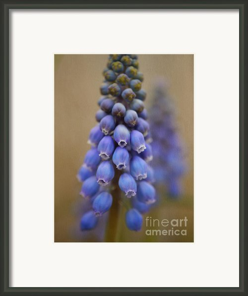 Bunch Of Grapes Framed Print By Irina Wardas