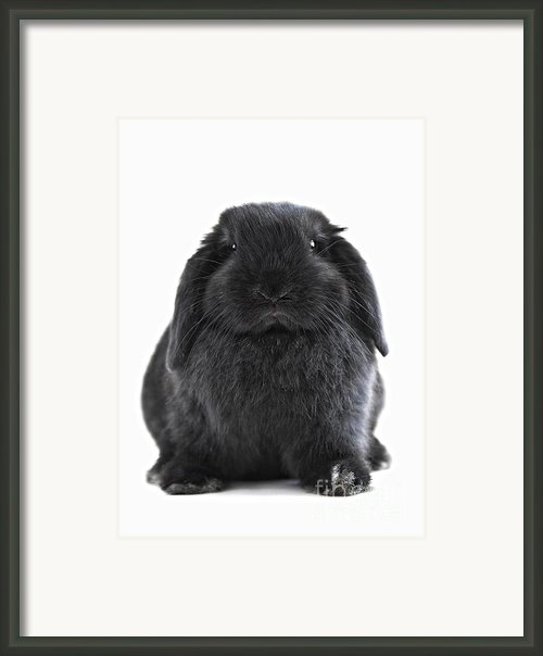 Bunny Rabbit Framed Print By Elena Elisseeva