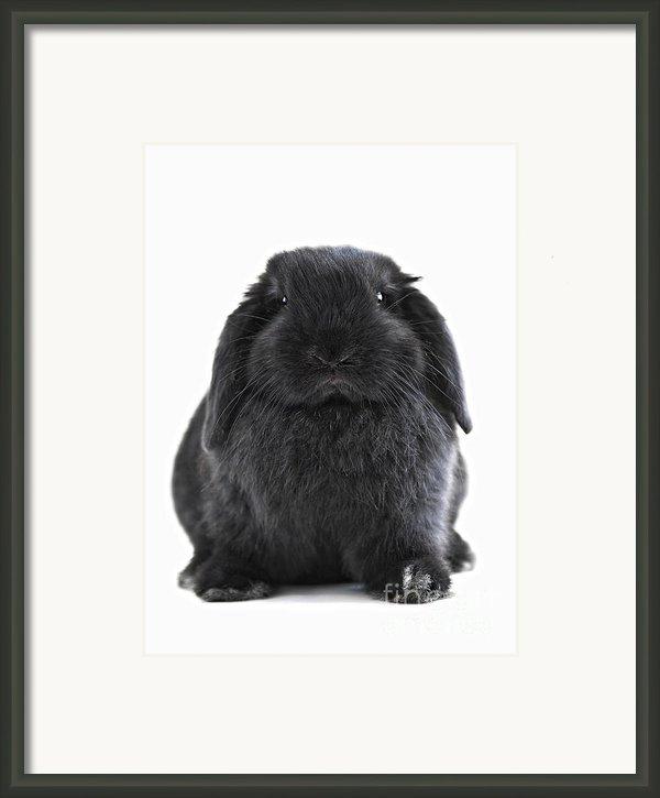 Bunny Rabbit Framed Print By Elena Elisseeva