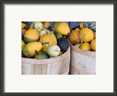 Bushels Of Gourds Framed Print By Janice Drew