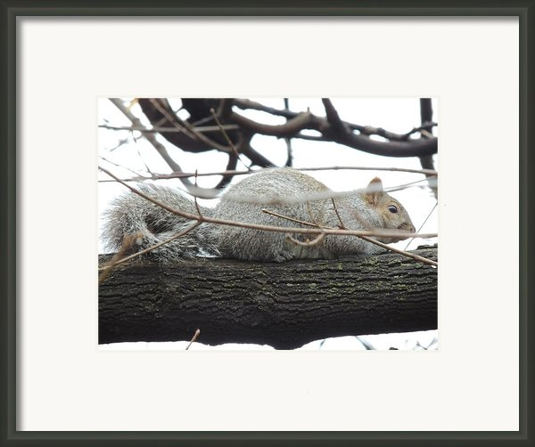 Bushy Tail Framed Print By Todd Sherlock