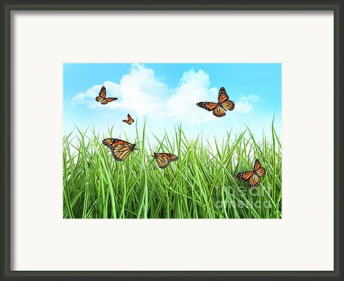 Butterflies In Tall Wet Grass  Framed Print By Sandra Cunningham