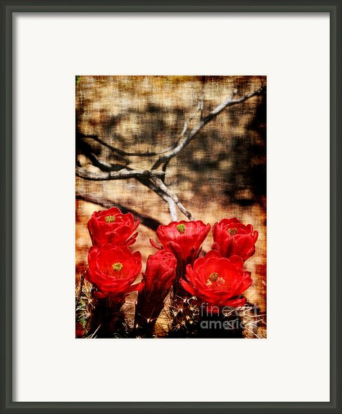Cactus Flowers 2 Framed Print By Julie Lueders