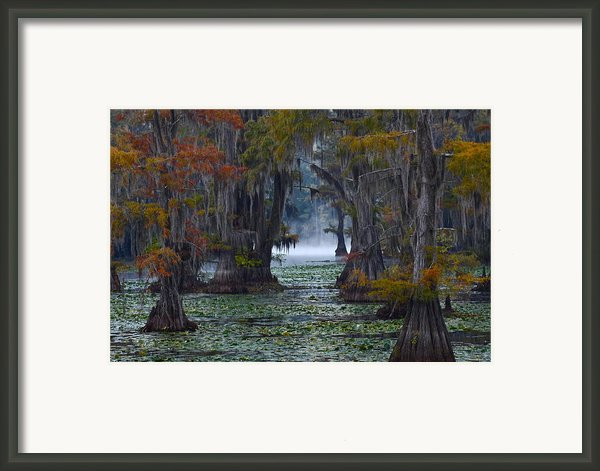 Caddo Lake Morning Framed Print By Snow White