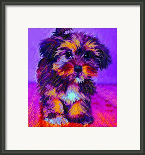 Calico Dog Framed Print By Jane Schnetlage