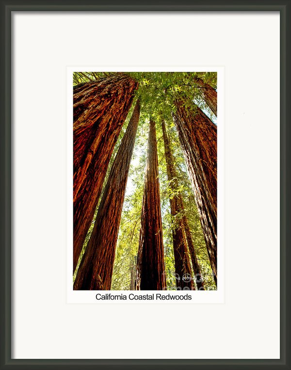 California Coastal Redwoods Framed Print By Artist And Photographer Laura Wrede