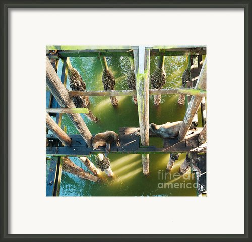 California Sealions Under The Santa Cruz Pier Framed Print By Author And Photographer Laura Wrede