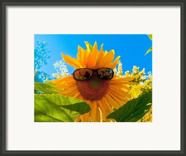 California Sunflower Framed Print By Bill Gallagher