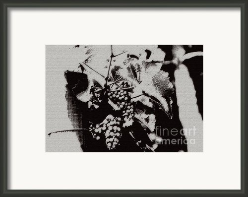 California Vineyard Framed Print By Linda Knorr Shafer
