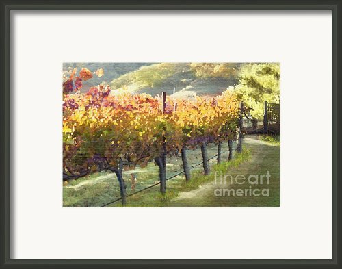California Vineyard Series Morning In The Vineyard Framed Print By Author And Photographer Laura Wrede