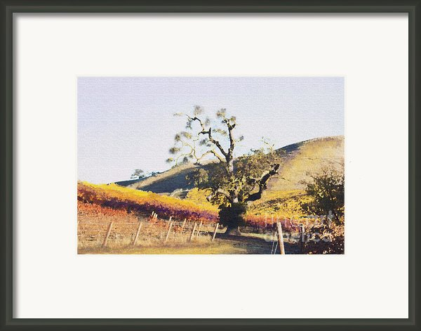 California Vineyard Series Oaks In The Vineyard Framed Print By Artist And Photographer Laura Wrede