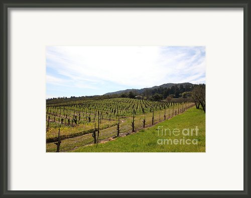 California Vineyards In Late Winter Just Before The Bloom 5d22114 Framed Print By Wingsdomain Art And Photography
