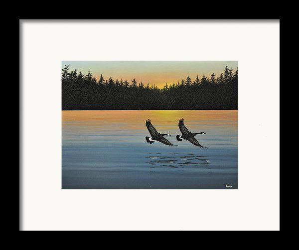 Canada Geese Framed Print By Kenneth M  Kirsch