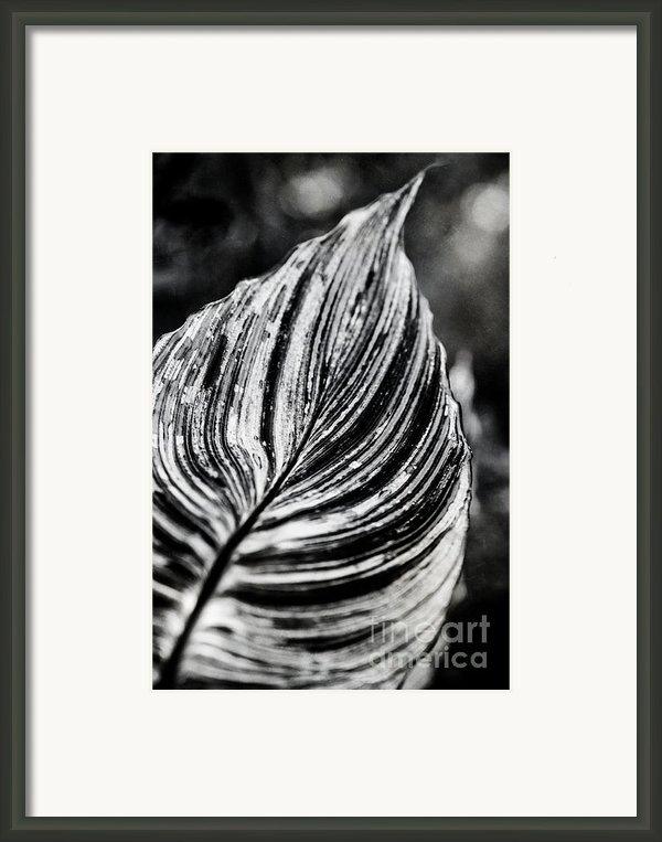 Canna Leaf Framed Print By Wenata Babkowski