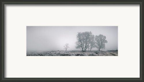 Cannock Chase Framed Print By Andy Astbury