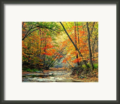 Canopy Of Color Ii Framed Print By Robert Harmon