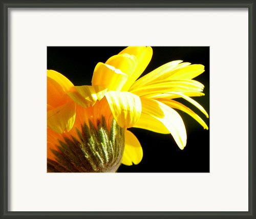 Canopy Of Petals Framed Print By Karen Wiles