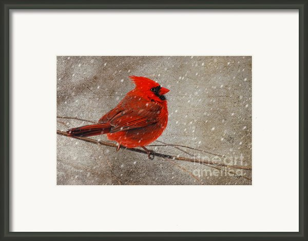 Cardinal In Snow Framed Print By Lois Bryan