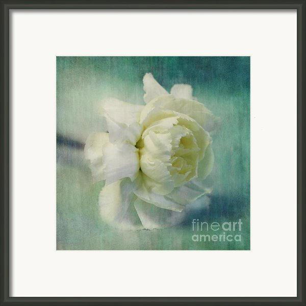 Carnation Framed Print By Priska Wettstein