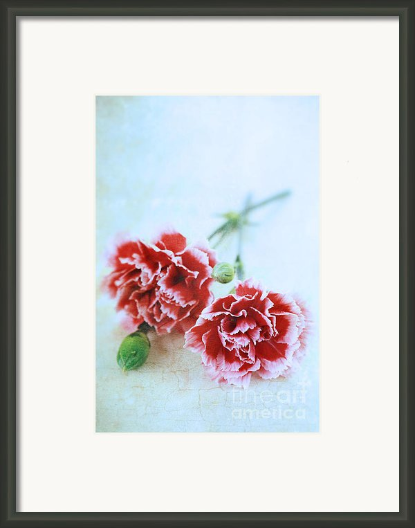 Carnations Framed Print By Stephanie Frey