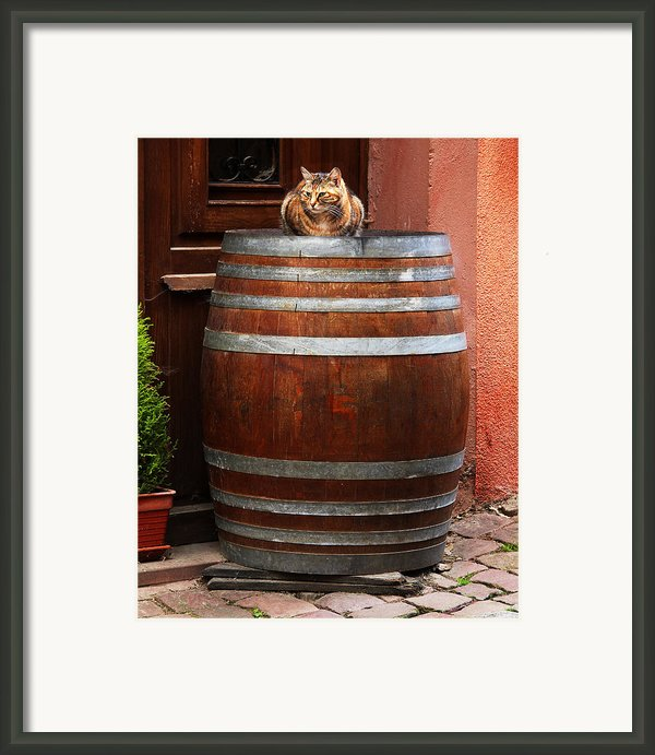 Cat Guarding A Wine Barrel In Alsace Framed Print By Greg Matchick