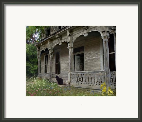 Cat House 1 Framed Print By Tom Straub
