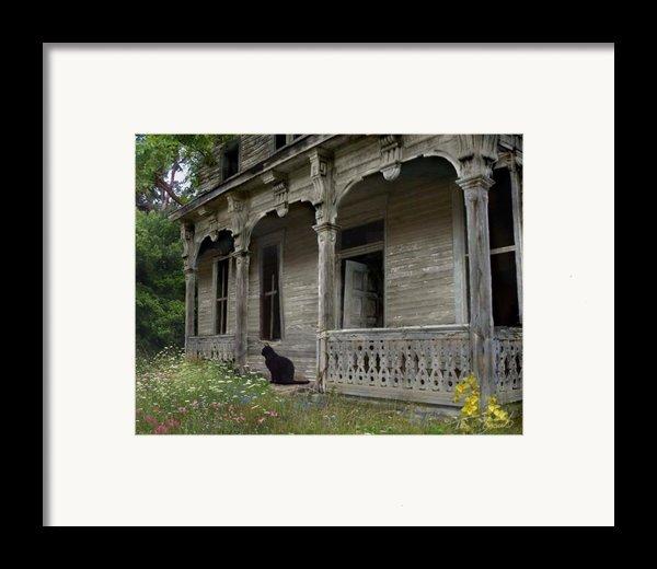 Cat House 1 Framed Print By Tom Straub