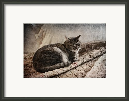 Cat On The Bed Framed Print By Carol Leigh