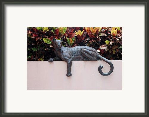 Cat Framed Print By Rob Hans