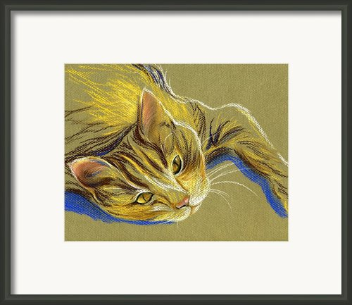 Cat With Gold Eyes Framed Print By Mm Anderson
