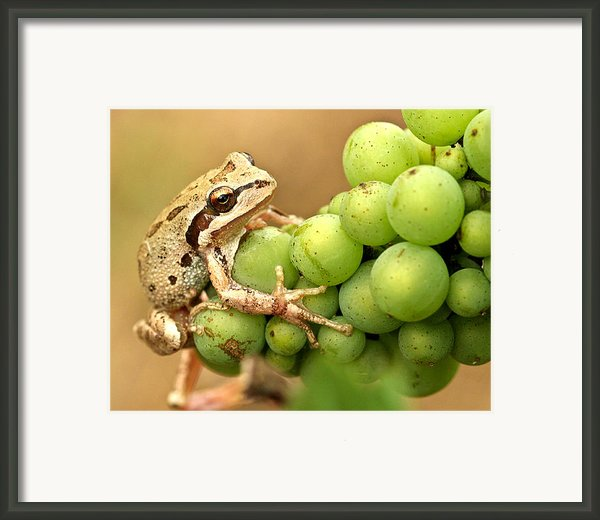 Catching A Ride On The Pinot Framed Print By Jean Noren