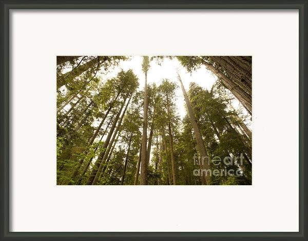 Cathedral Forest Framed Print By Author And Photographer Laura Wrede