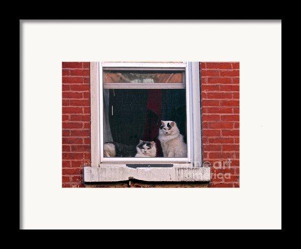 Cats On A Sill Framed Print By Randi Shenkman